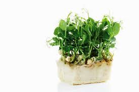 Affilla Cress Box X16