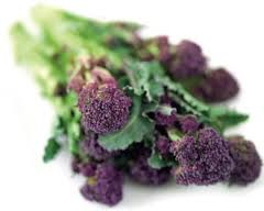 Brocolli Purple Box 4Kg