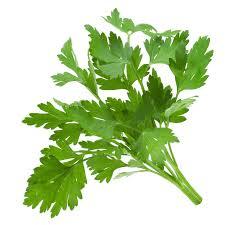 Herbs Corriander 500Gr