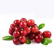 Cranberry Box U.S.A 24X340