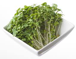 Cress Mustard Punnet Only